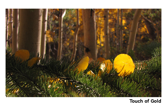 touchofgold_web.jpg
