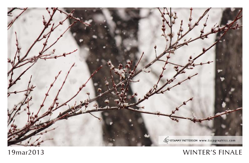 Winter'sFinale_title2013web.jpg