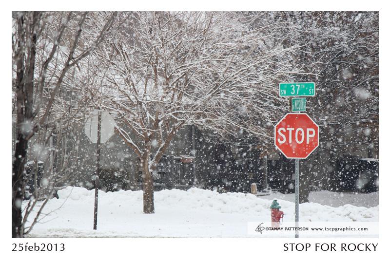 StopForRocky_title2013web.jpg