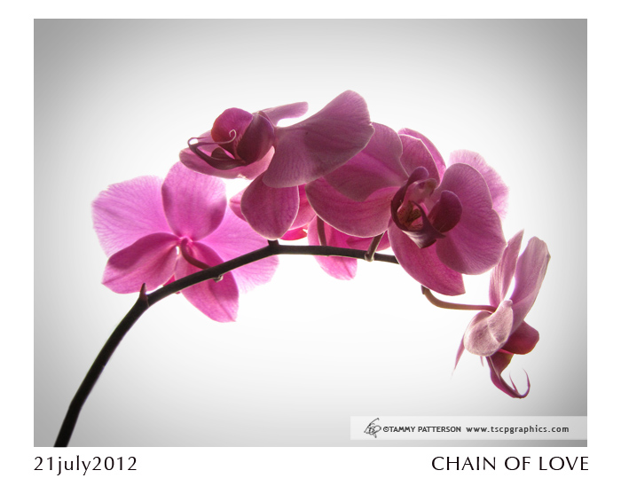 Pink Orchids_title21july2012web.jpg