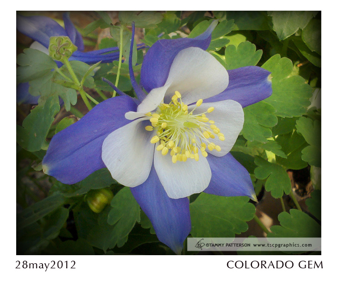 ColoradoGem_title28may2012web.jpg
