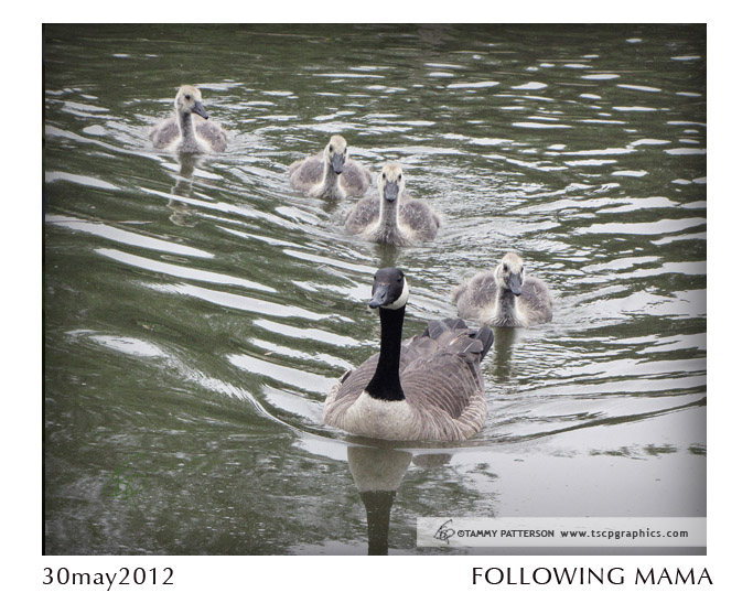 FollowingMama_30may2012web.jpg