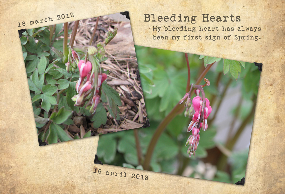 BleedingHearts_april2013_WEB.jpg