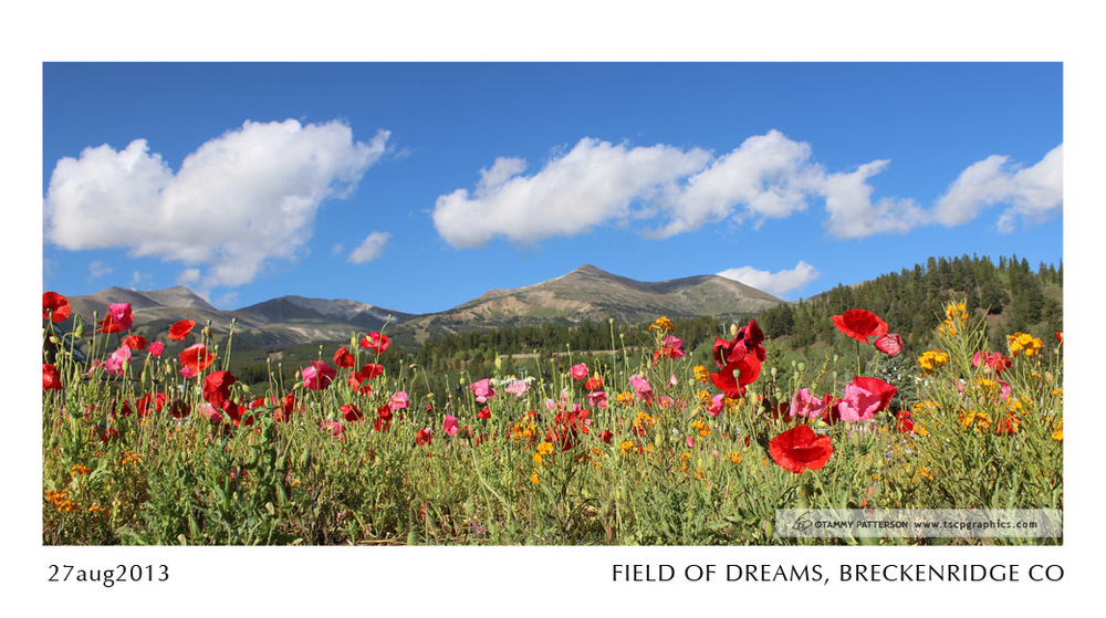 FIELD OF DREAMS_27aug2013web.jpg