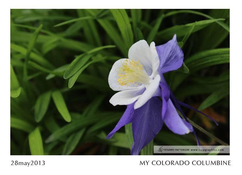 Columbine_28may2013web.jpg