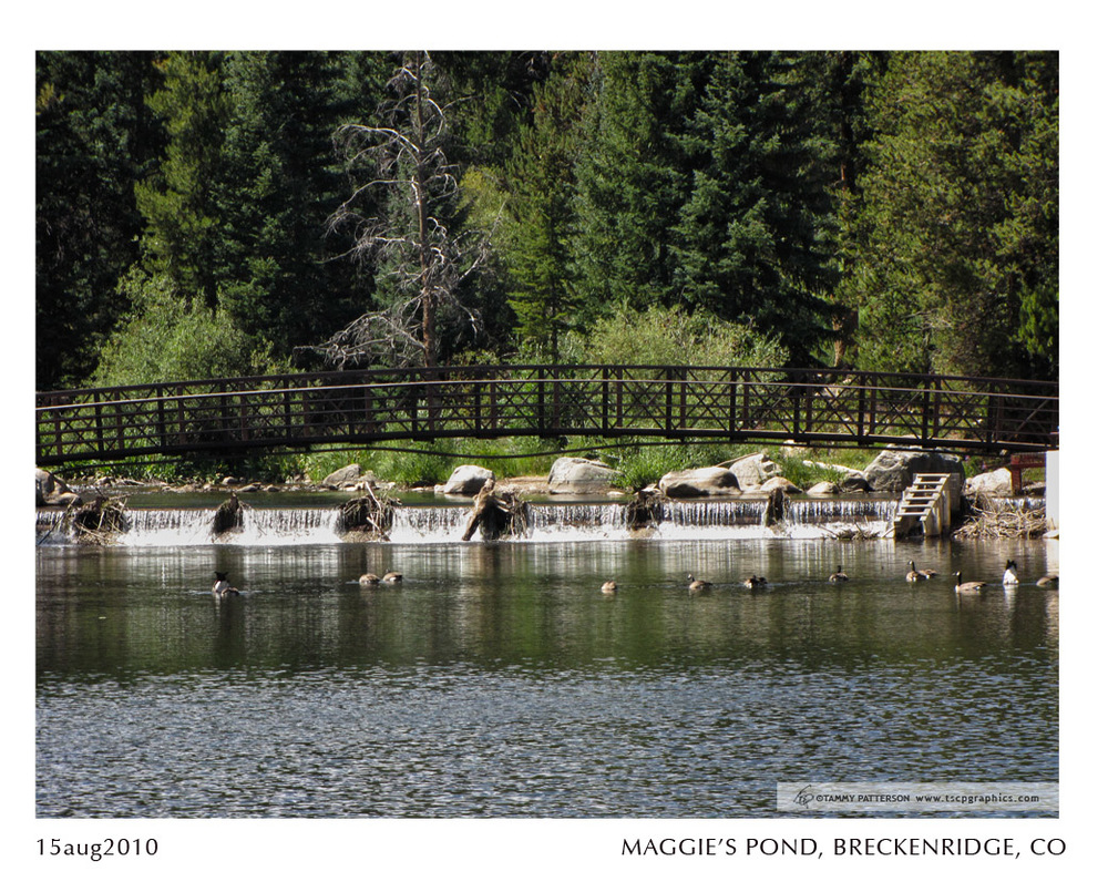 MAGGIE'S POND_15aug2010web.jpg