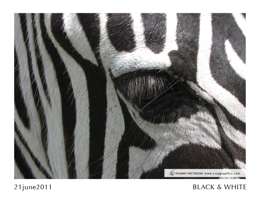 Black&White_21june2011web.jpg