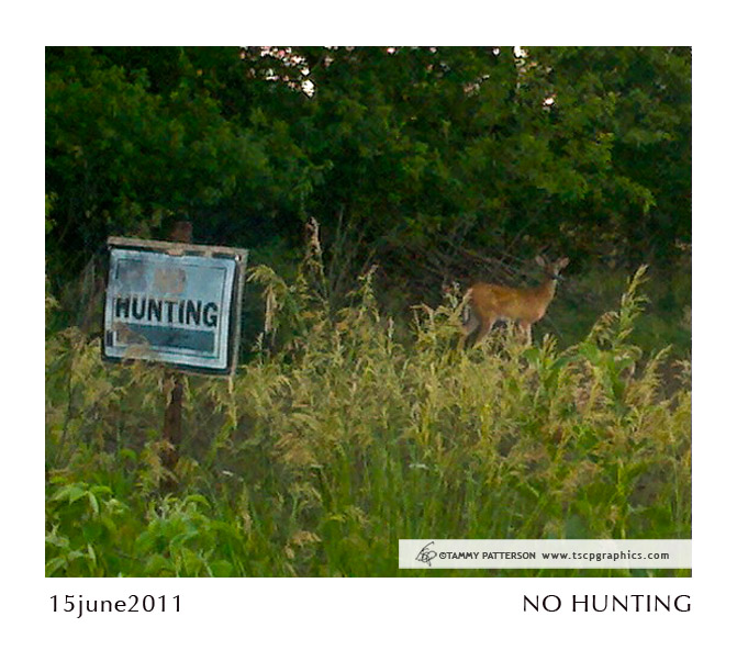 NO HUNTING_15june2011web.jpg