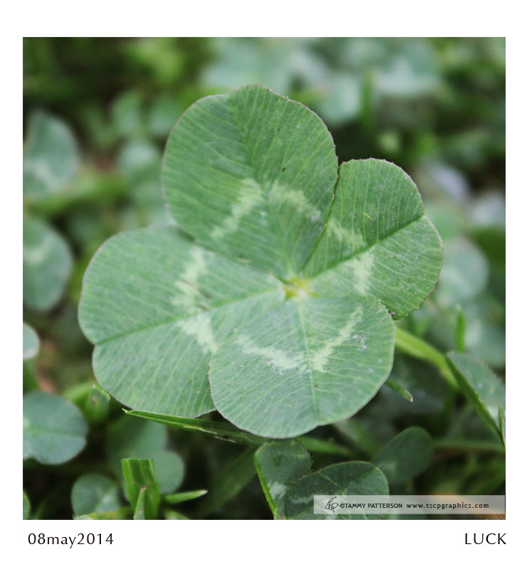 LUCK_08may2014web.jpg