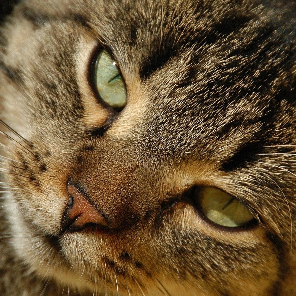 bigstockphoto_Cat_347032.jpg