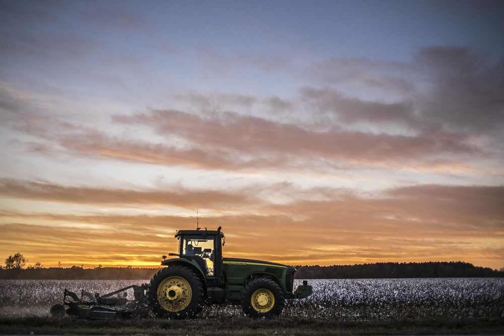 A farmer harvests cotton outside of Statesboro, GA.