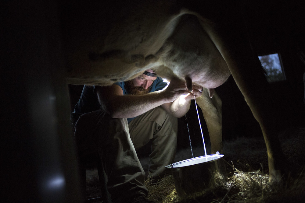 Andy Williams milks a cow before sunrise. Passionate about farming, Williams used to work odd jobs and occassionally took night shifts at a bakery in order to work his own small plot of land he rented outside the city of Savannah. After being offered a job as a caretaker of a farm during the fall of 2014, Andy moved with his family to Swainboro and now works full-time doing what he loves.