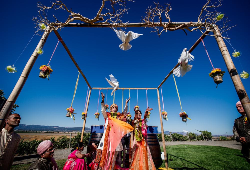Viansa Winery Wedding Dove Release
