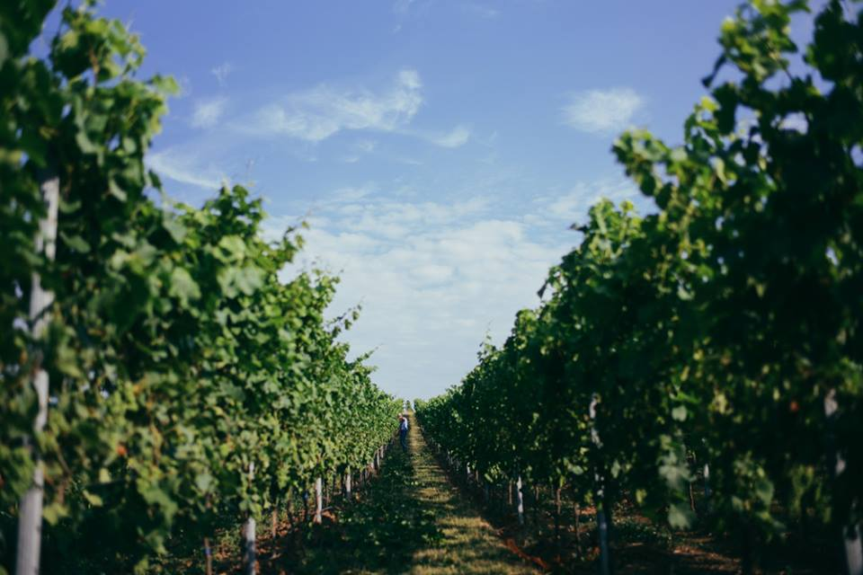 Weingut Montigny