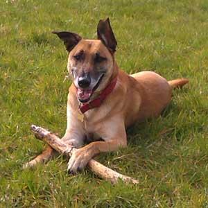 Sammy Dog