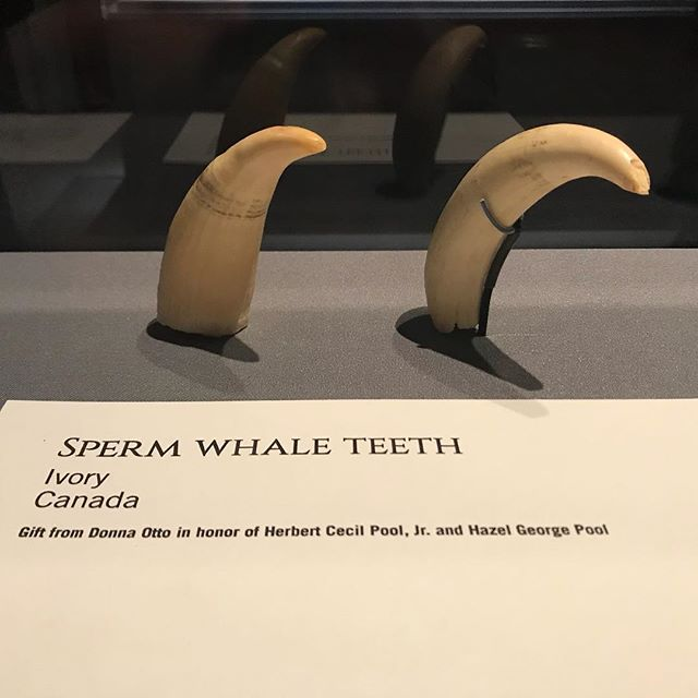 Lots of cool #teeth on our visit to the @hmns today... #nerddentist #westu #bellaire #htx #dontforgettobrushyourteeth