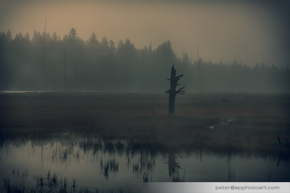 Firehole Drive - Dead tree trunk in fog