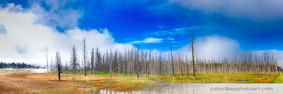 Firehole Drive - Meadow with dead tree trunks