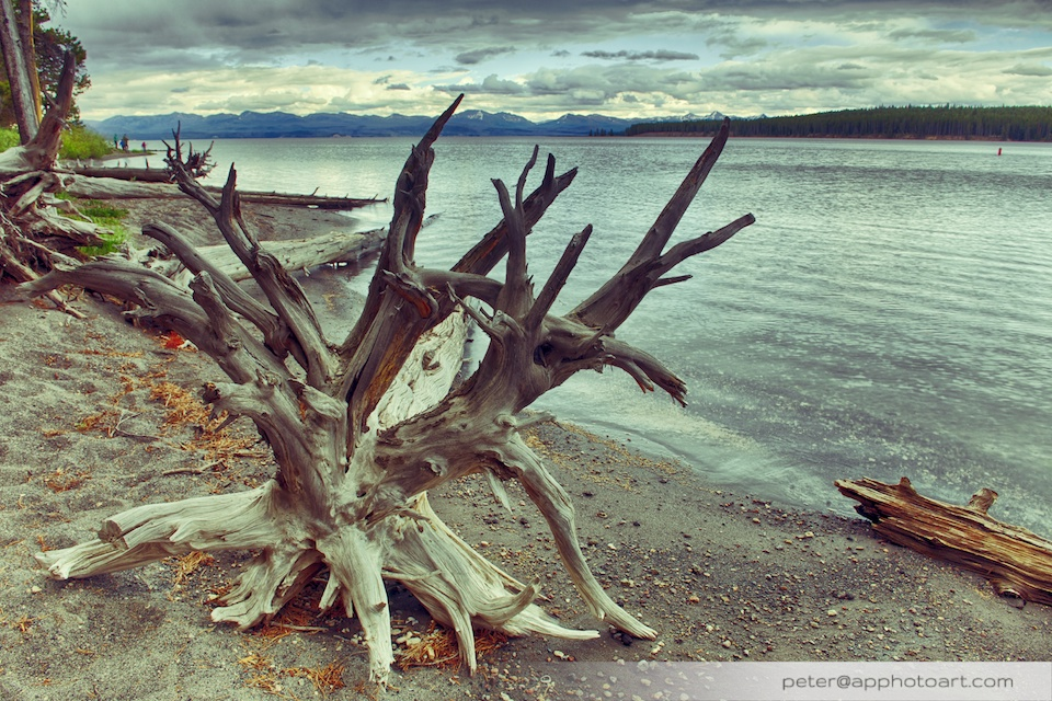 Yellowstone Lake - Trunk