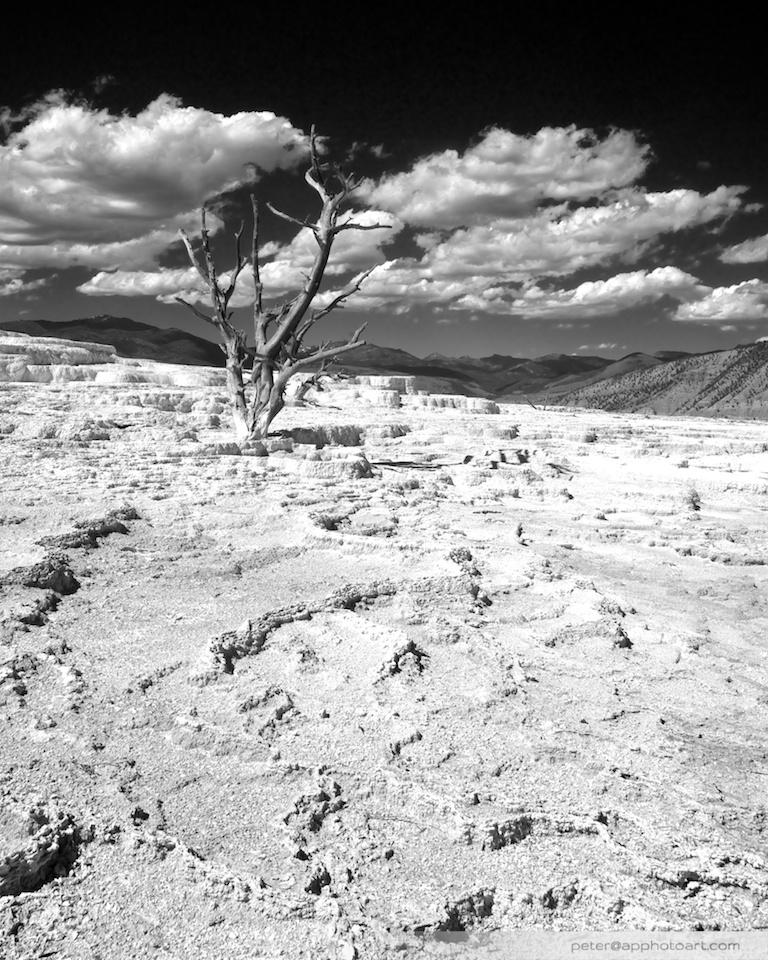 Mammoth - Dry spring
