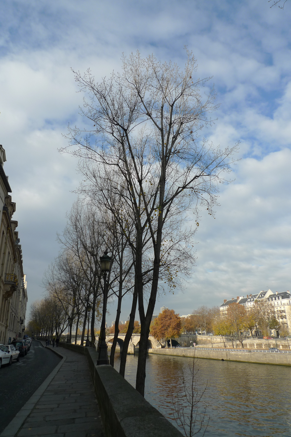 trees on seine.jpg