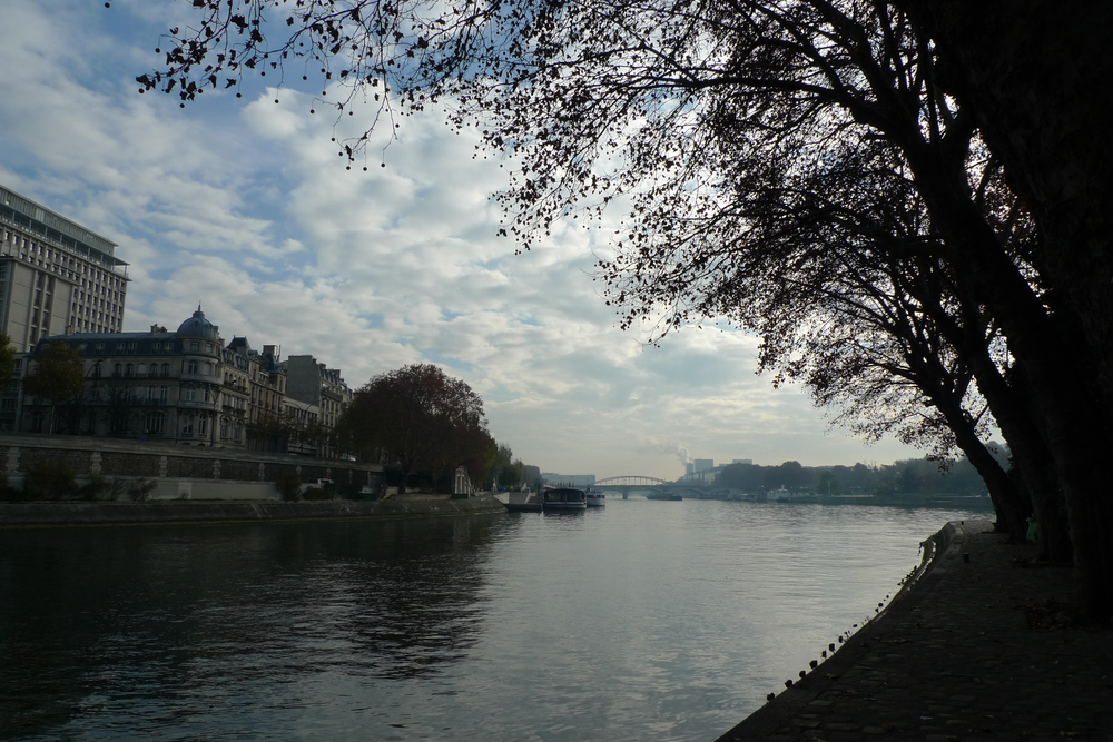 trees by the seine.jpg
