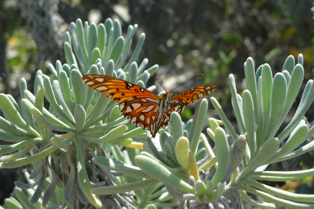 orange butterfly underside.jpg