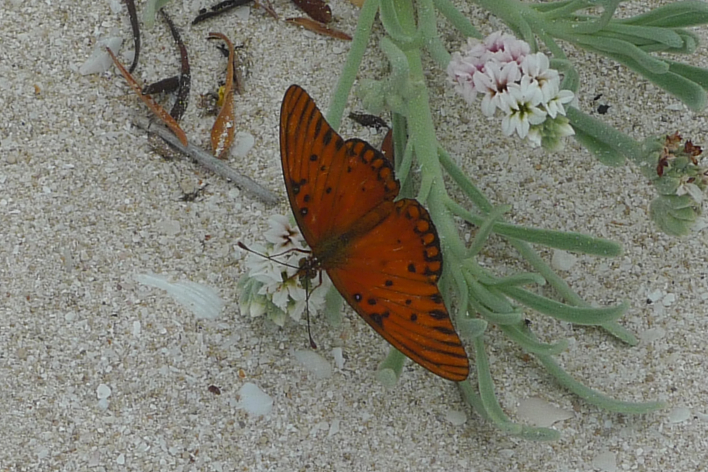 orange butterfly with flowers.jpg