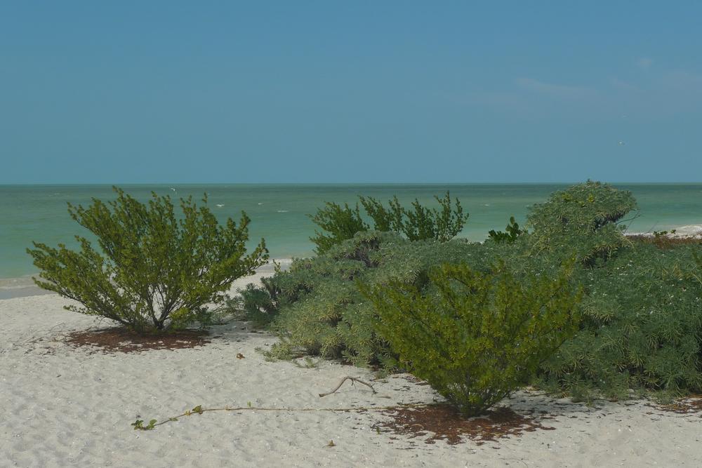 beach foliage.jpg