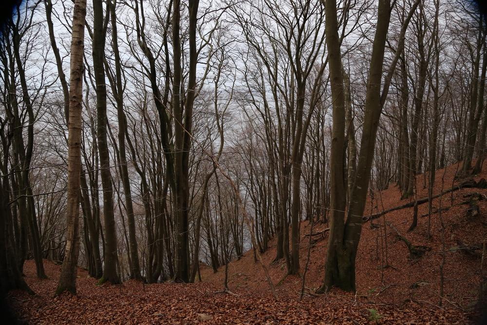 Woods near Nimis