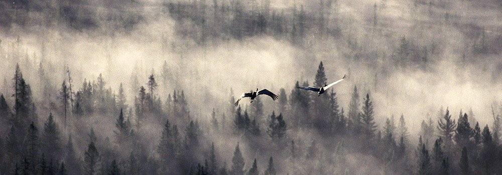 A pair of Sandhill cranes begins their southern migration above British Columbia's Chilcotin on an autumn morning.