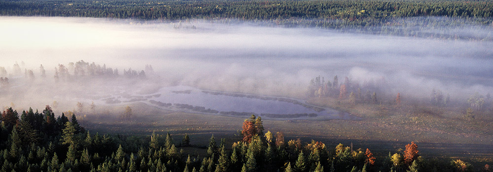 Morning sun melts the fog revealing Chilcotin pine forests and wetland.
