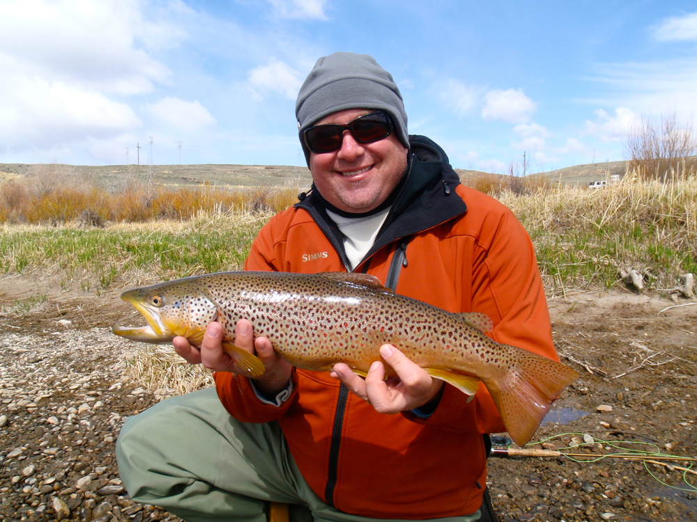 Brown trout, Wyoming fly fishing