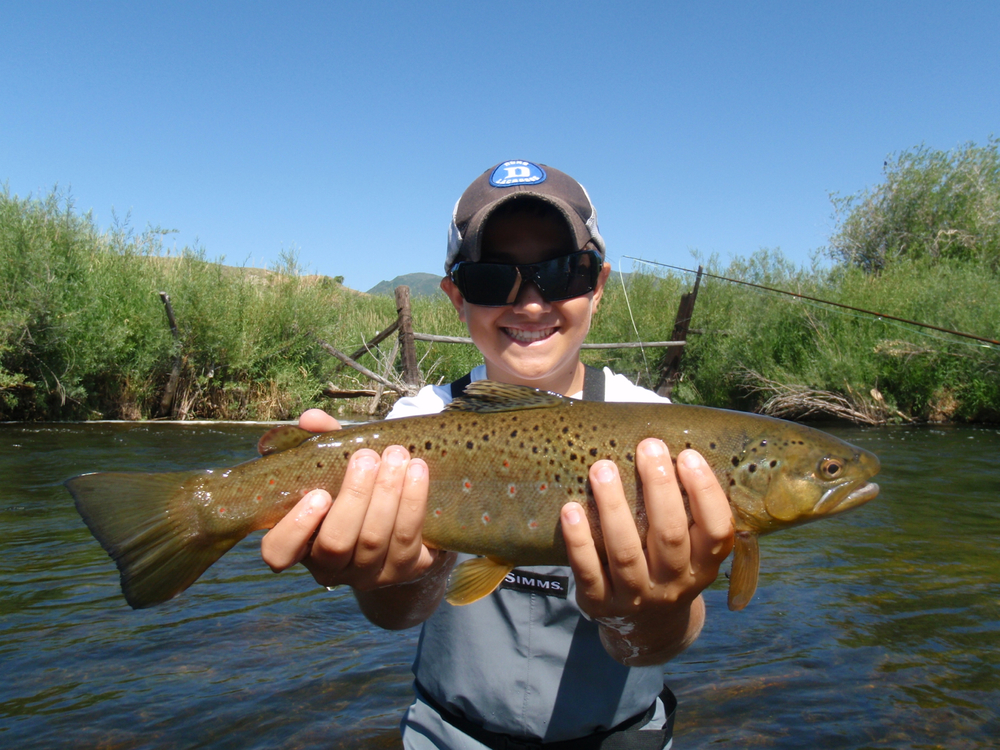 Brown trout, Weber River, Utah