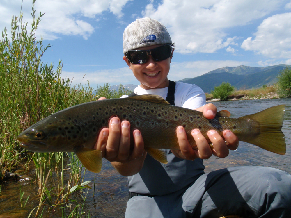Provo river guide service fish of utah photo gallery for Weber river fishing