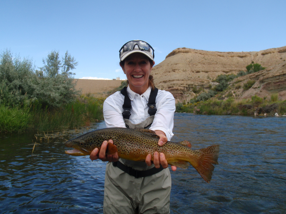 brown trout, river x, UT