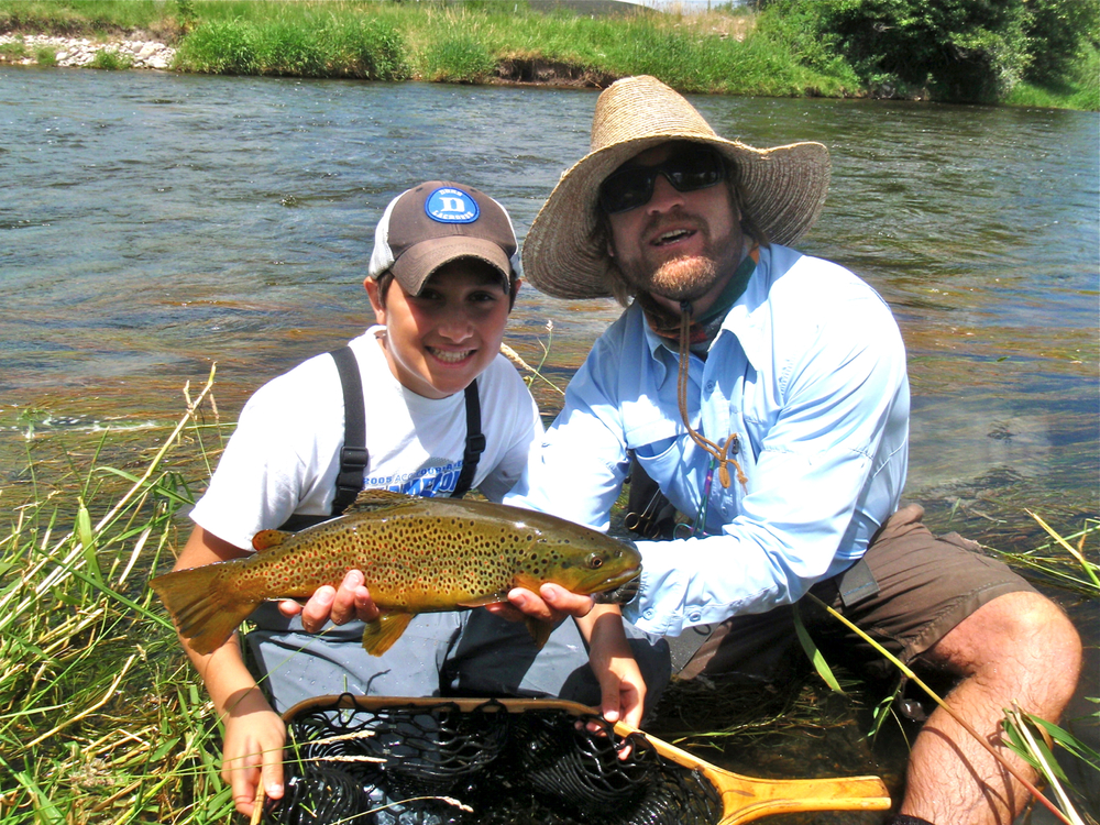 Healthy Brown Trout, Weber River