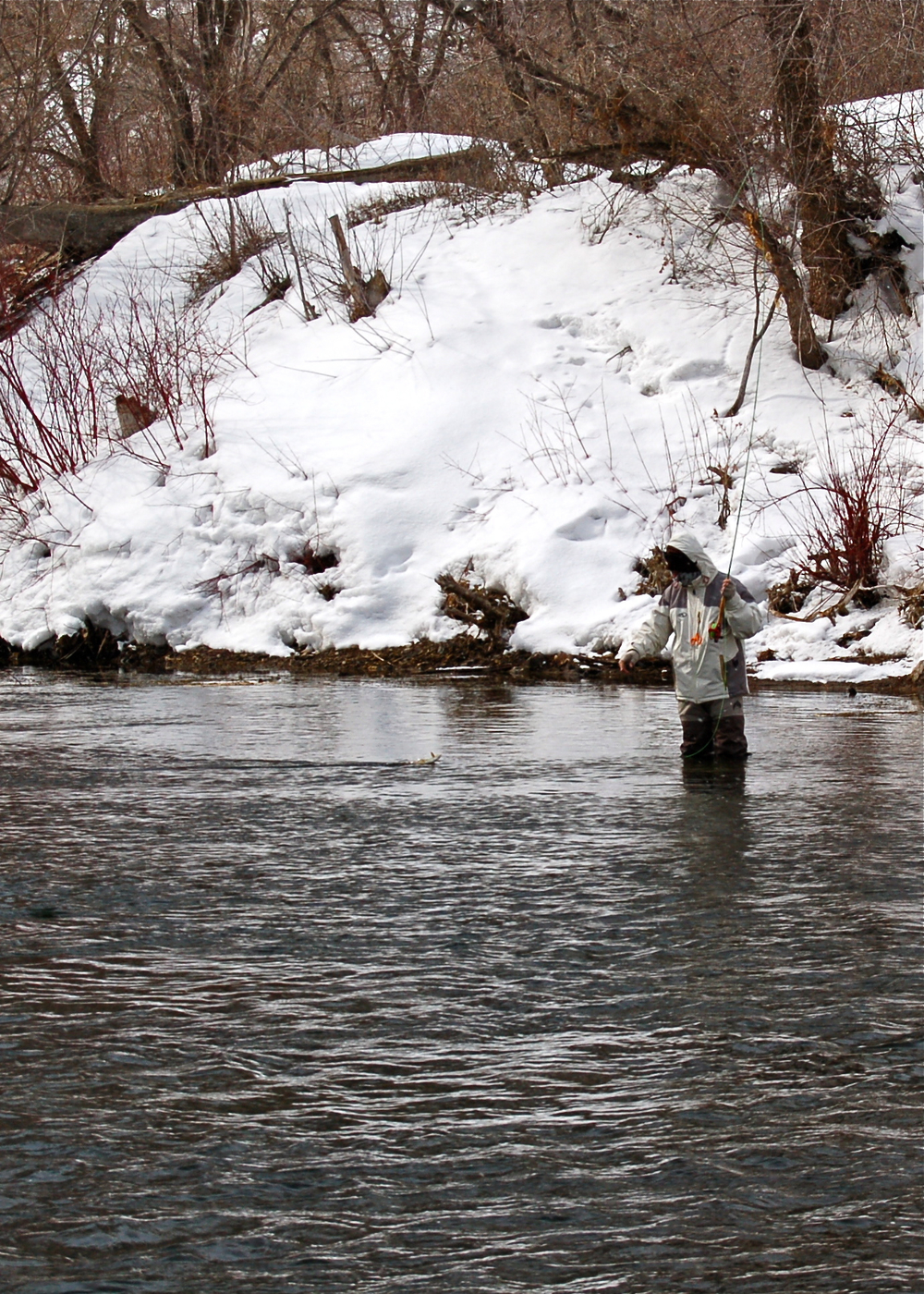 Mike landing a rainbow trout, lower Provo River