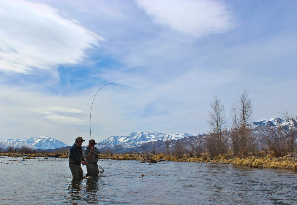 fly fishing on the middle provo river, park city, utah