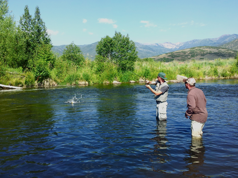 Fly fishing blog provo river guide service park city for Trout fishing utah