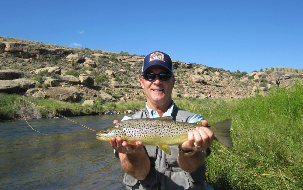 fish of utah, brown trout