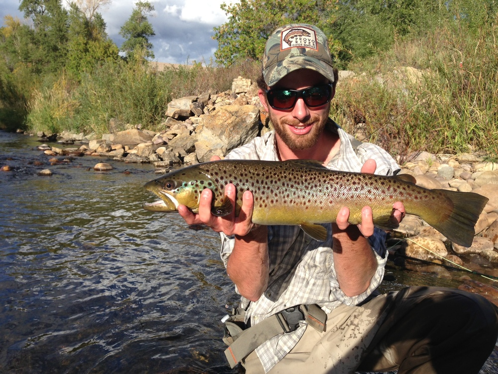 late afternoon brown trout, provo river, utah fly fishing