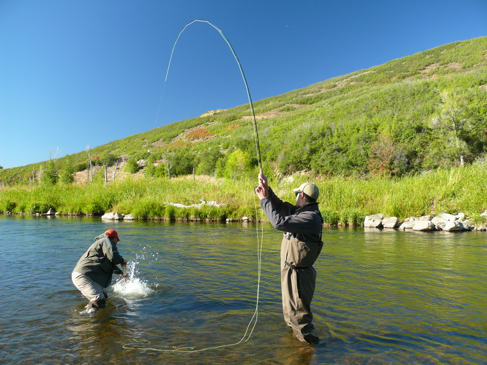 Park city fly fishing guides provo river guide service for Utah fishing regulations