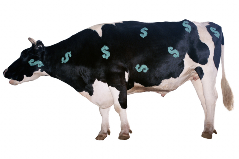 money_cow.jpg