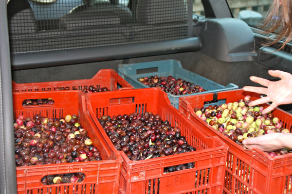 olives_1823.jpg
