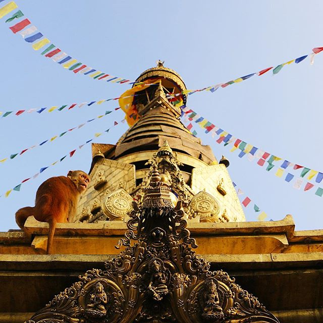 or Monkey Temple 🐒 #kathmandu #nepal #himalayas . . . . . . . . .  #wanderlust #adventureseeker #travelmore #goexplore #wonderfulplaces #openmyworld #lovetotravel #travel #stupa #travelbug #adventurethatislife #roamtheplanet #streetphotography #travelpgotography #topdecker #beautifuldestinations #theglobewanderer #instagood10k #fodorsonthego #lonelyplanet #travelblogger #passionpassport #tlpicks #himalayangeographic #bbctravel #ongooglemaps #travelandlife