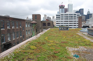 401 Richmond - Green Roof