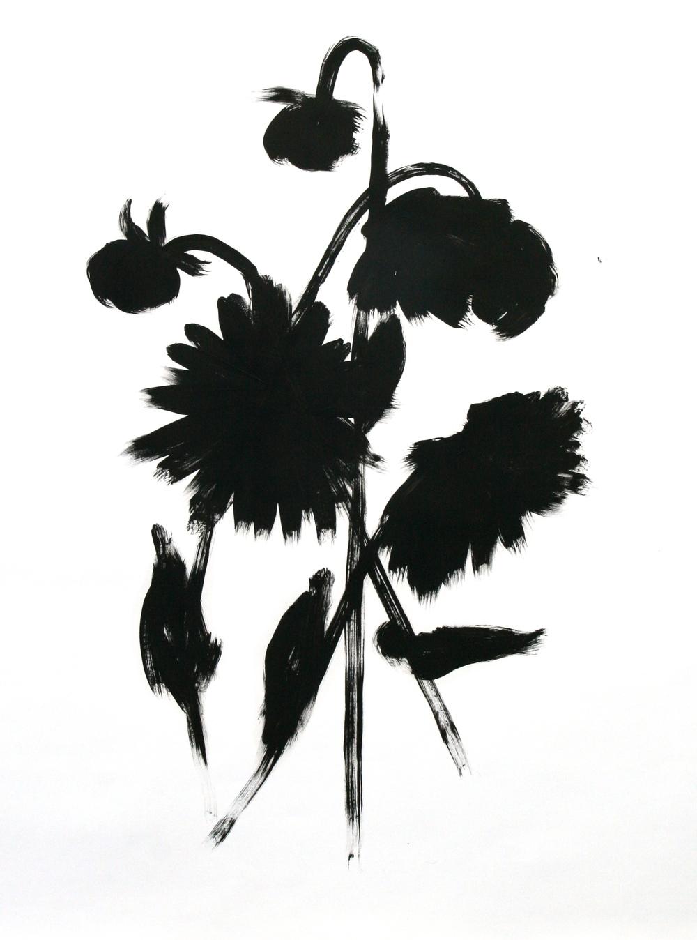 Dahlia Sketch 2