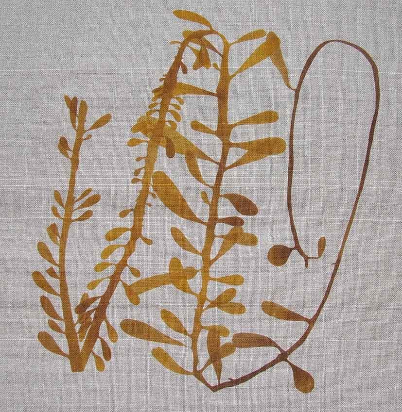 Seaweed Stencil © Francesca Chalk