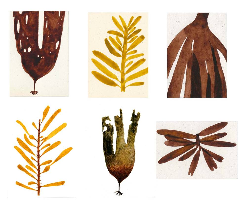 Seaweeds Watercolours © Francesca Chalk